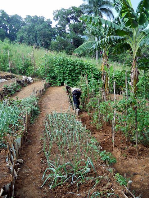 """Projekt, ktorý misionár don Vrecko nazýva """"Siať nádej"""". V malej záhradke za pastoračným centrom zaviedol novinky: terasy, kompost, okopávanie a polievanie. Haiťania budú úrodu zbierať dvakrát do roka."""