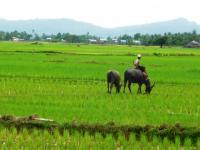 Deti pracujúce na ryžovom poli