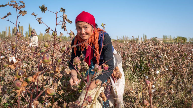 Cotton female harvester in Uzbekistan - photo ILO