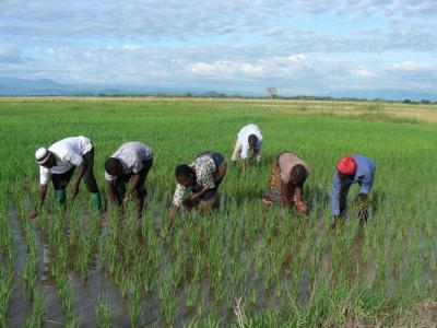 Projekt OZ Maendeleo / svojpomocná skupina farmárov