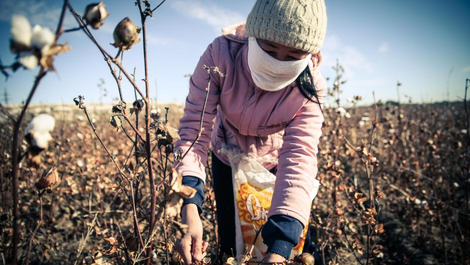 Forced cotton harvesting in Uzbekistan - photo HRW